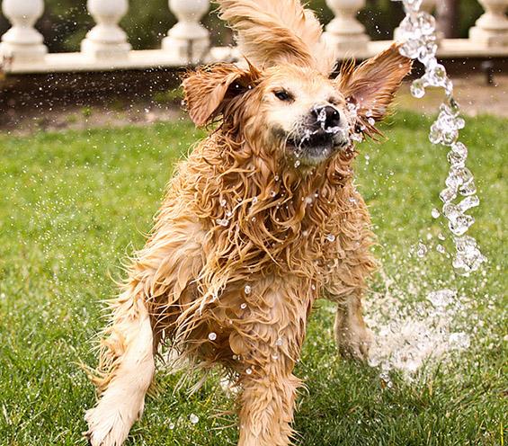 Запознајте го Чемп – најсреќното куче на светот