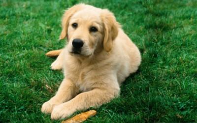Како сопствениците на кучиња го гледаат својот миленик