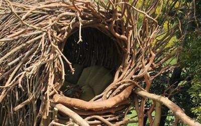 Сакате ли да преспиете во птичјо гнездо?