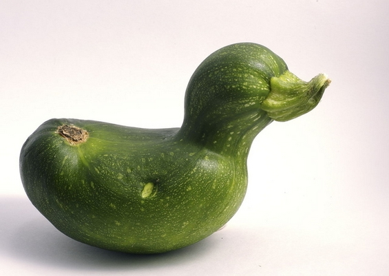 Смешни зеленчуци кои израснале за да бидат патки