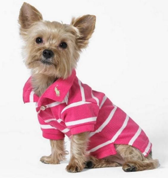 Стилска облека и аксесоари за кучиња од Ралф Лорен