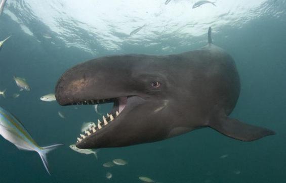 Највеселиот кит на светот