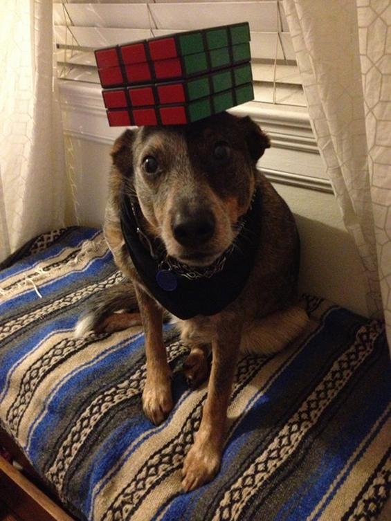 Куче со неверојатно чувство за рамнотежа