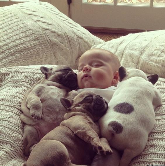Неодоливо бебенце се гушка со три малечки француски булдози