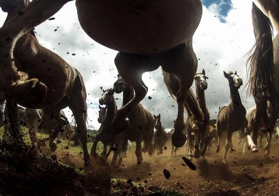 Брилијантни фотографии од натпревар на National Geographic