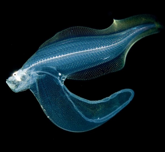 Флуоресцентни морски животни низ фотообјектив
