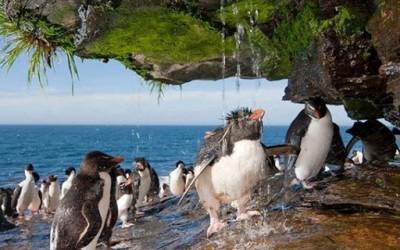 Пингвини на туширање