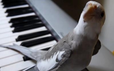 Нимфа пее во придружба на пијано