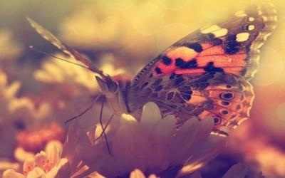 Како беше онаа, пеперутката е среќа, не... среќата е пеперутка, ако трчаш по неа ќе ти бега, ако застанеш мирно, ќе ти застане на рака... да, мислам дека се разбираме, тоа е поентата. Среќа, среќа, среќа, добро луѓе, што всушност значи тоа СРЕЌА? Еве на пример како јас ја разбирам среќата.