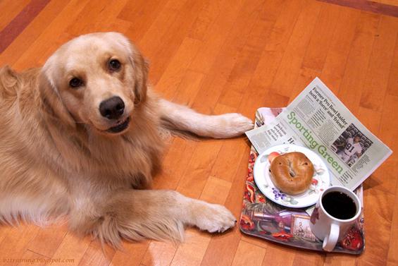 (1) Вашиот работен ден прикажан преку кучиња