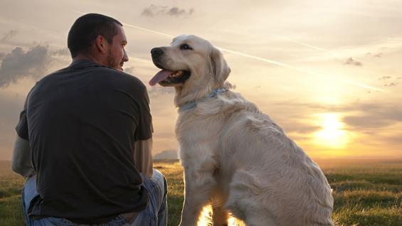 Животни лекции кои можете да ги научите од кучињата