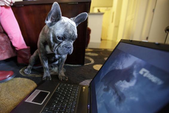 (13) Вашиот работен ден прикажан преку кучиња.mk
