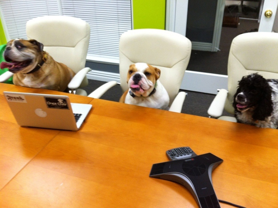 (15) Вашиот работен ден прикажан преку кучиња.mk