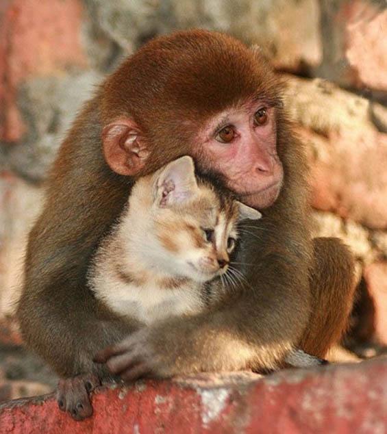 Неодоливи животни кои ќе ви го направат денот подобар