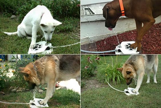 (3) Кул и практична фонтана за кучиња