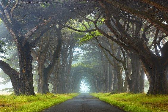 Магични летни пејсажи