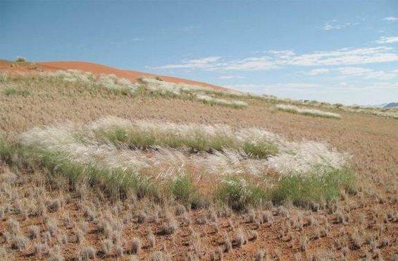 """Мистериозни """"самовилски кругови"""" во пустината Намиб"""