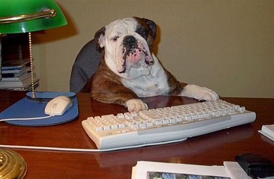 (5) Вашиот работен ден прикажан преку кучиња.mk