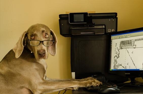 (7) Вашиот работен ден прикажан преку кучиња.mk