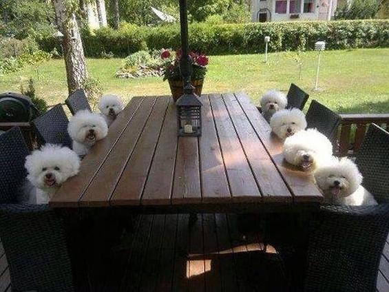 (8) Вашиот работен ден прикажан преку кучиња.mk