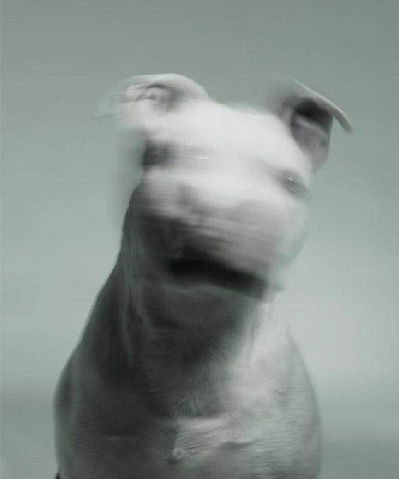 (9) Емотивни портрети на напуштени кучиња
