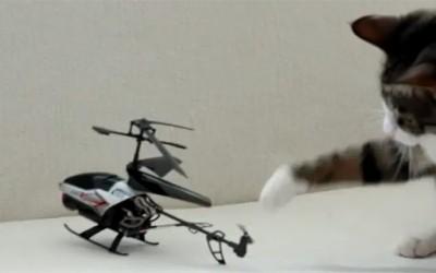 Мачки во борба со хеликоптер
