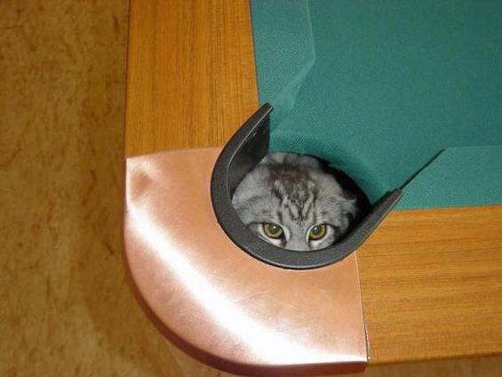Мачка која одлично игра билјард