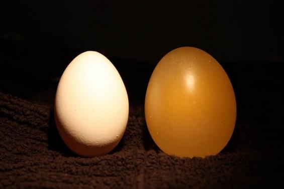 (10) neverojatno interesen eksperiment so jajce i ocet-www.kafepauza.mk