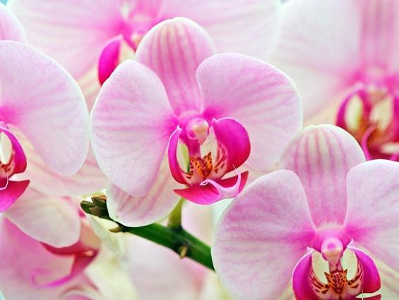 Цвеќето како афродизијак – 6 видови кои ќе ви ги разбудат сетилата