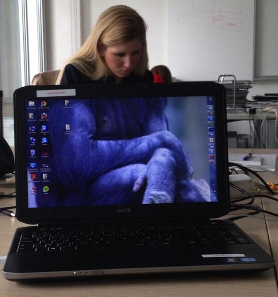 Пресмешни животински фотографии со колегите на работа