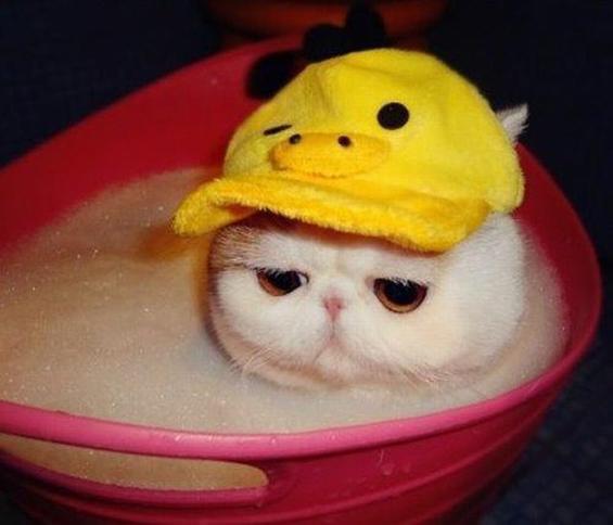 Запознајте ја најслатката мачка на светот