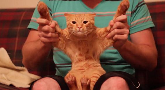 Мачка шизи на дабстеп