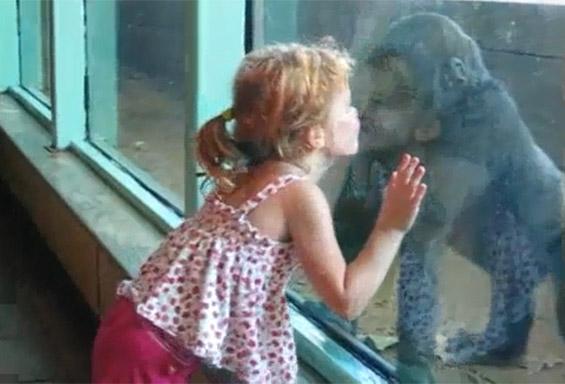 Слатката дружба на мало девојче и горила