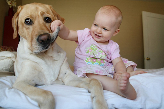 Видео компилација: бебиња кои сакаат кучиња