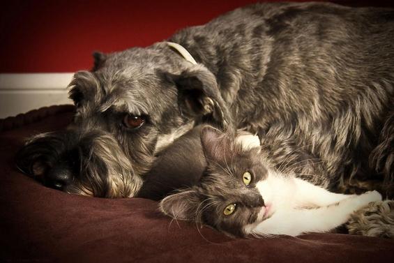 30 докази дека постои пријателство помеѓу кучињата и мачките
