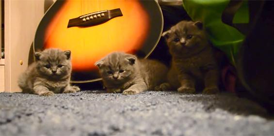 Како да успиете 3 мали мачиња?