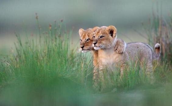 Слатки животинчиња кои ќе ви го направат денот поубав