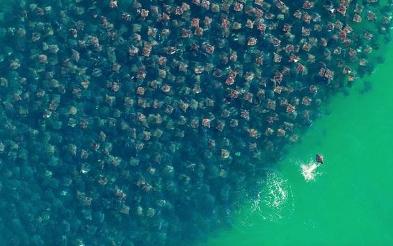 Спектакуларни фотографии од собири на животните во дивината