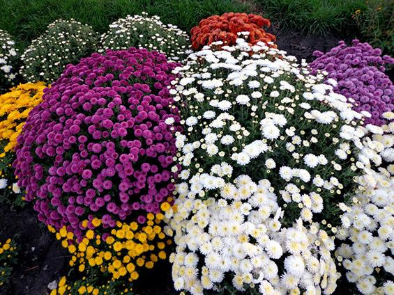Есенско-зимски растенија за разубавување на вашиот дом