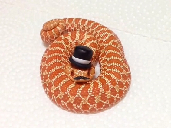 Ова е единствениот начин змиите да изгледаат слатко