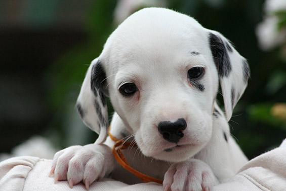 Помалку познати факти за кучињата
