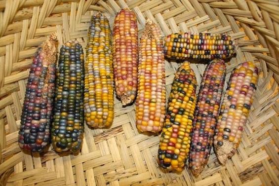 Вакви клавчиња пченка не сте виделе досега