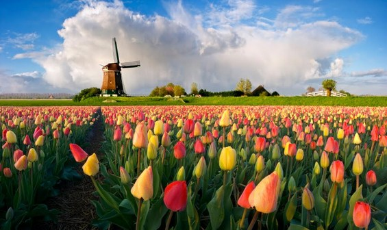Зошто Холандија има два називи на англиски?