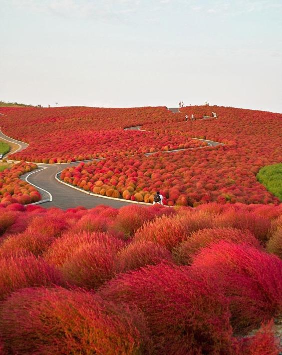 Бои на есента кои го одземаат здивот