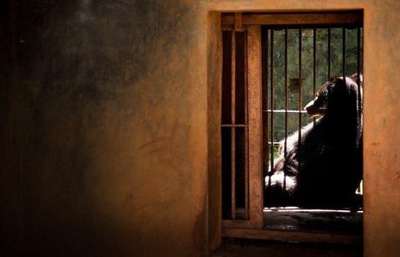 Портрети од животни кои ќе ви ги отворат очите за животот во зоолошките градини
