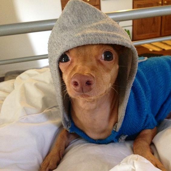 Кучето кое стопи милиони срца ширум светот