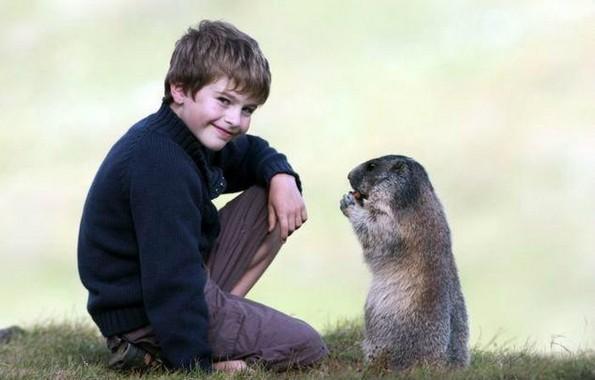 Интересно пријателство меѓу мрмот и мало момче