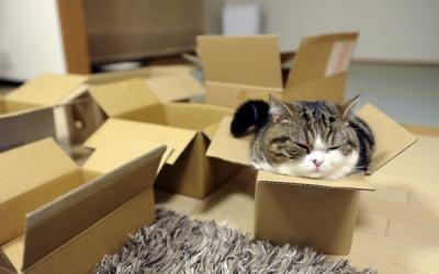 Мачки во кутии кои ќе ве изнасмеат до солзи