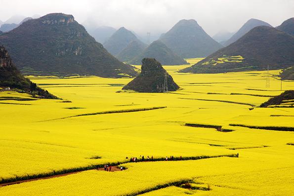 Океан од жолти цвеќиња кој ќе ве остави без зборови