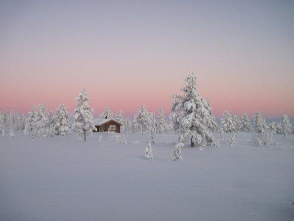 Норвешката бореалска шума, Норвешка